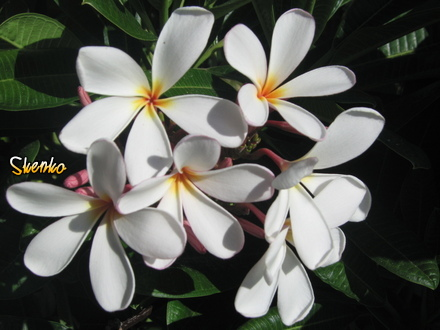 Flowers images